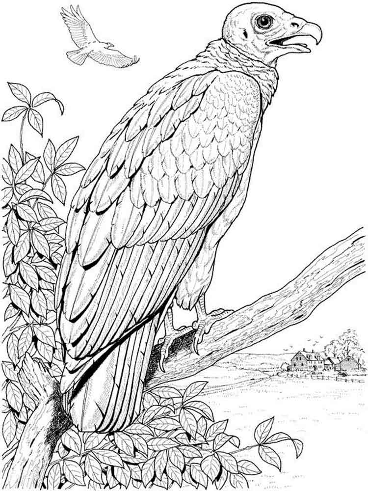 Vulture Coloring Pages Download And Print Vulture Coloring Pages