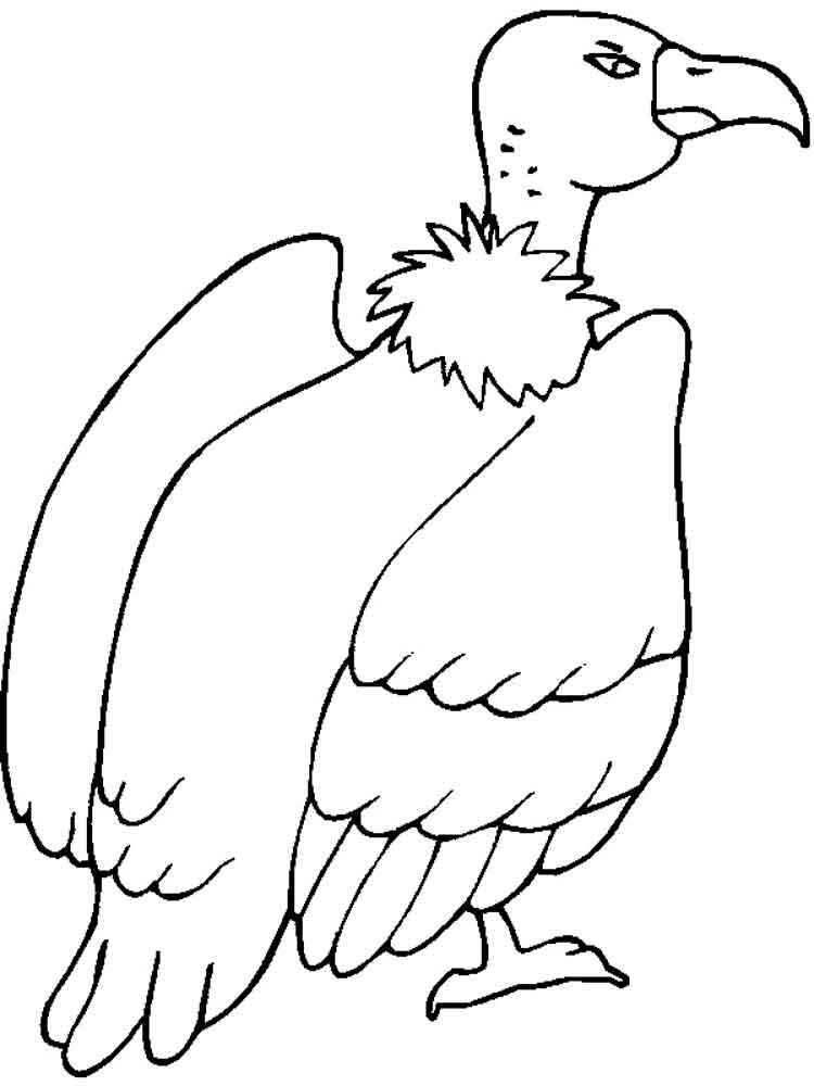 Vulture coloring pages Download and print Vulture