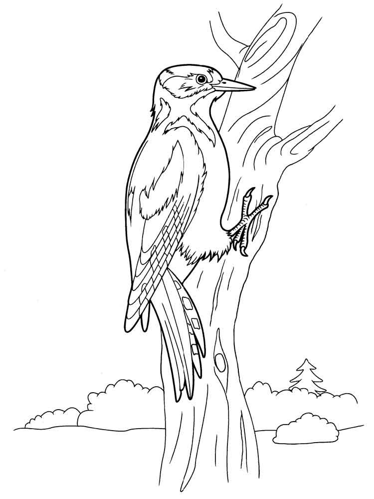 Woodpecker coloring pages Download and print Woodpecker coloring