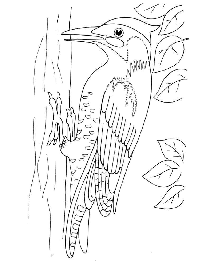 Woodpecker coloring pages Download