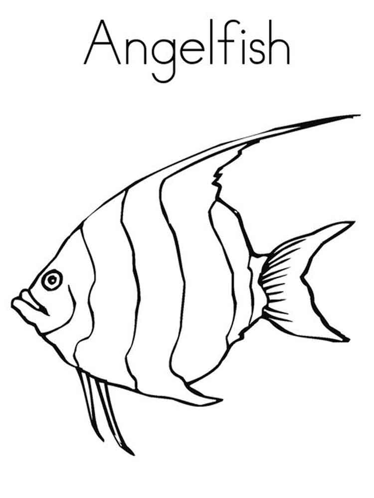 Angelfish coloring pages. Download and print Angelfish coloring pages.