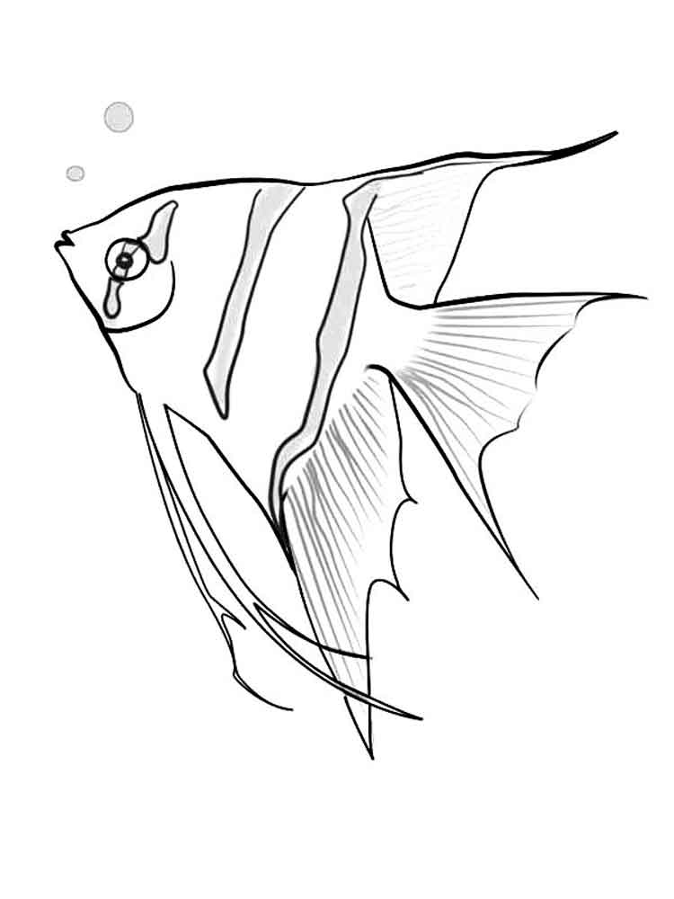 Angelfish coloring pages Download and print Angelfish coloring pages