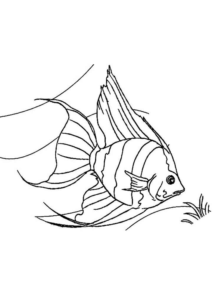Angelfish coloring pages. Download and print Angelfish ...