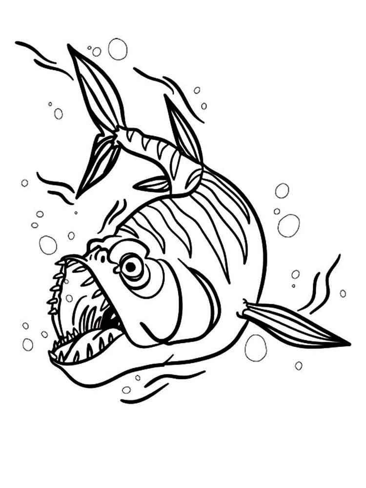 Barracuda Coloring Pages Download And Print Barracuda