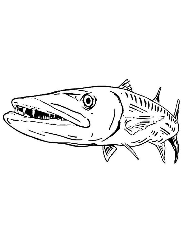 Barracuda coloring pages Download