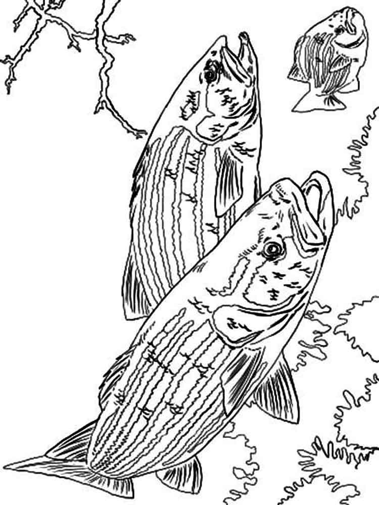 Bass Fish Coloring Pages Download And Print Bass Fish