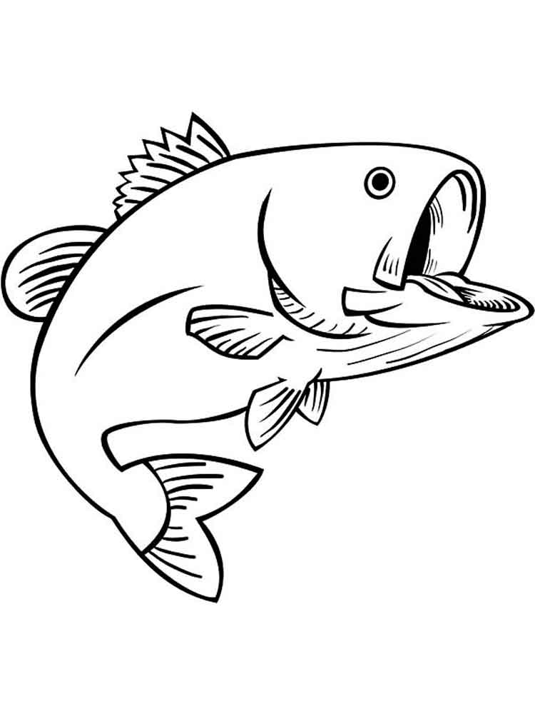 Bass fish coloring pages Download