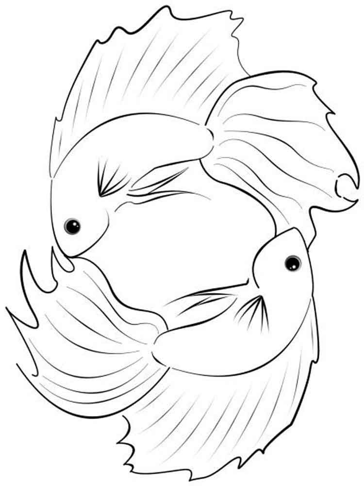 Betta fish coloring pages download and print betta fish for Color pages of fish
