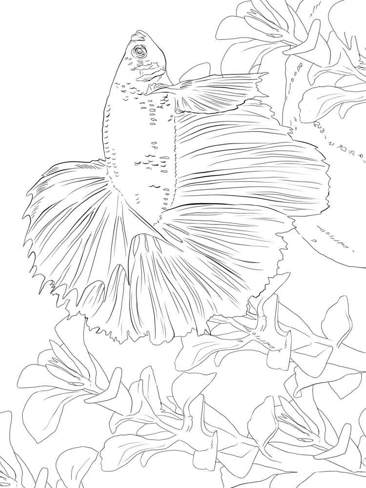 Betta Fish Coloring Pages 6