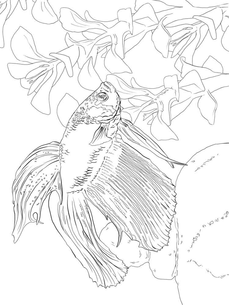 Betta fish coloring pages Download and print Betta fish coloring