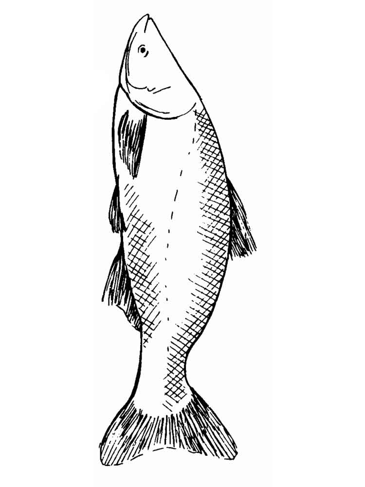 Carp coloring pages Download and print Carp coloring pages