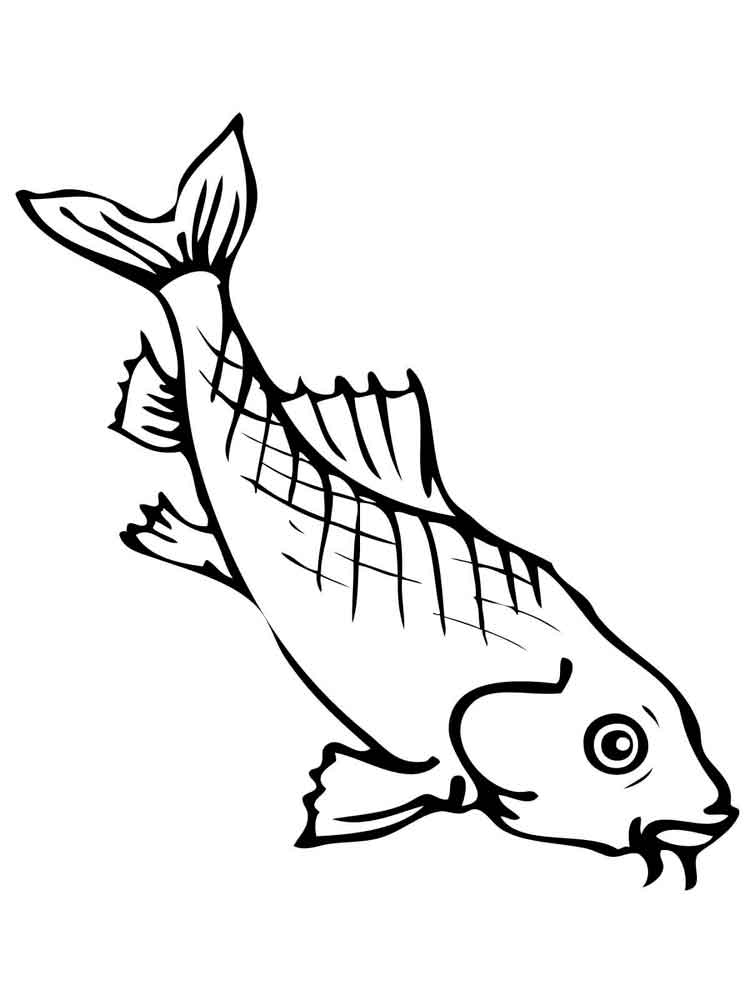 Carp coloring pages Download and