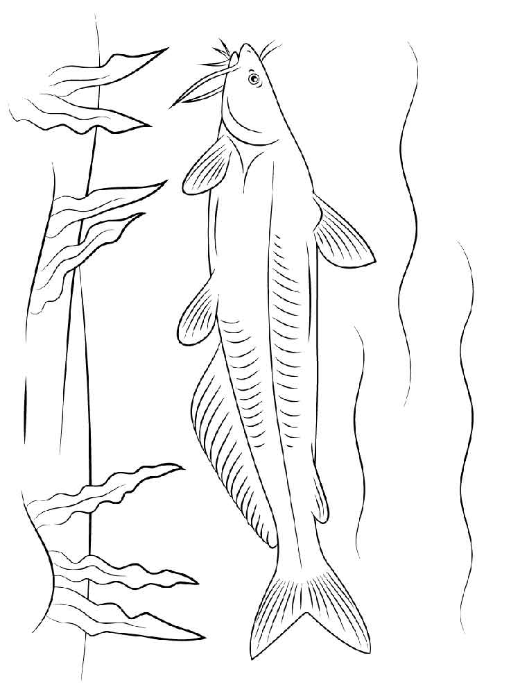 Catfish coloring pages Download and print Catfish coloring pages