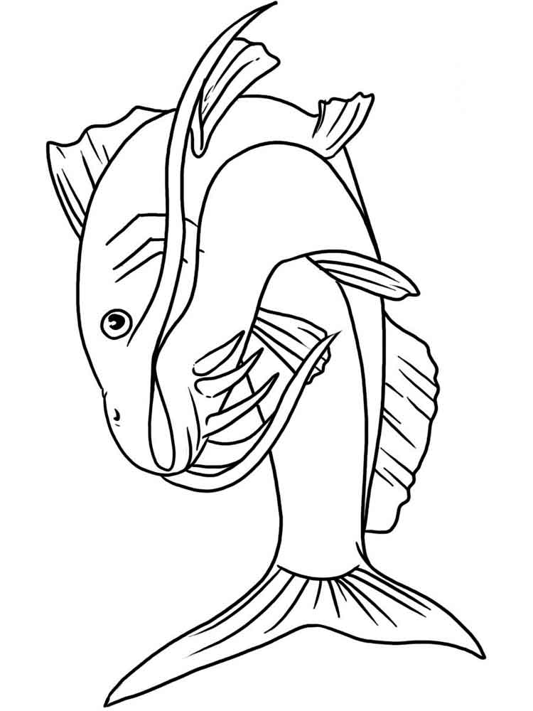 Catfish coloring pages