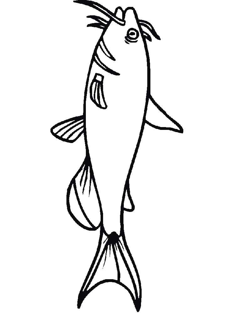 Catfish coloring pages. Download and print Catfish ...