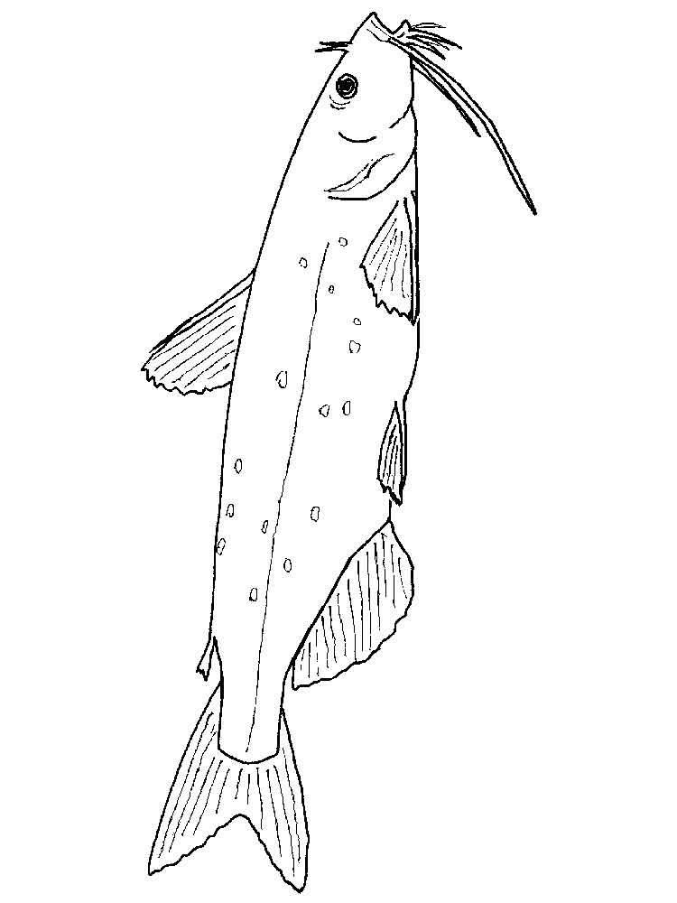 Catfish Coloring Pages Download And Print Catfish