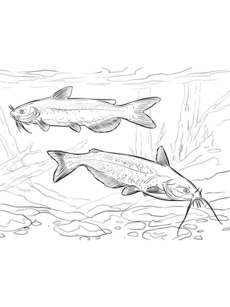 free coloring pages of catfish - photo#36