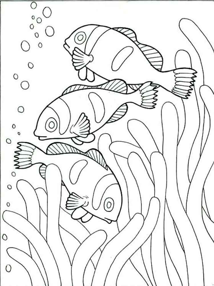 Clownfish coloring pages Download