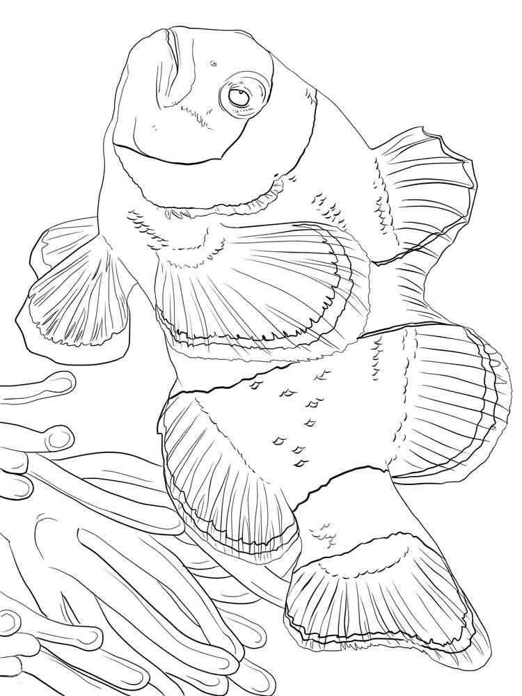 Clownfish coloring pages. Download and print Clownfish ...