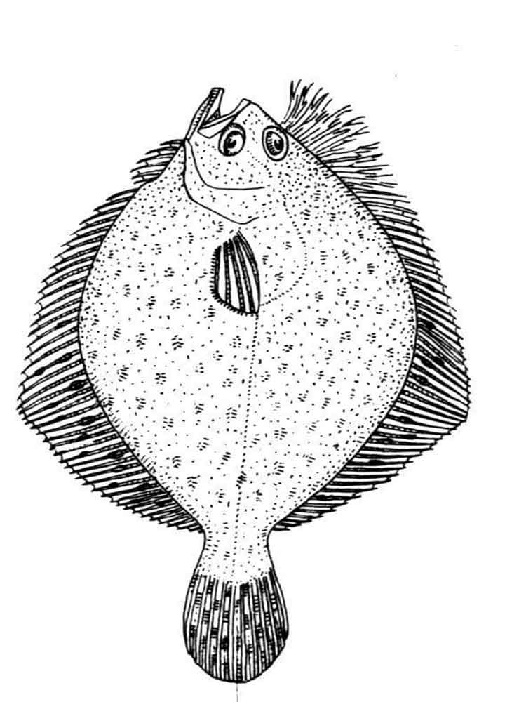 Flounder fish coloring pages Download and print Flounder