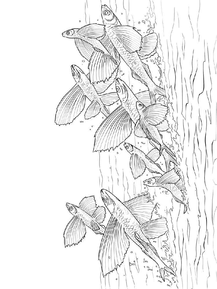 Flying fish coloring pages Download