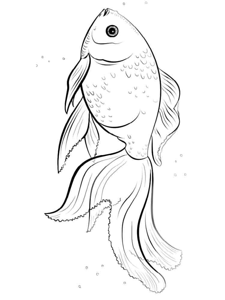 Goldfish Coloring Pages Download And Print Goldfish