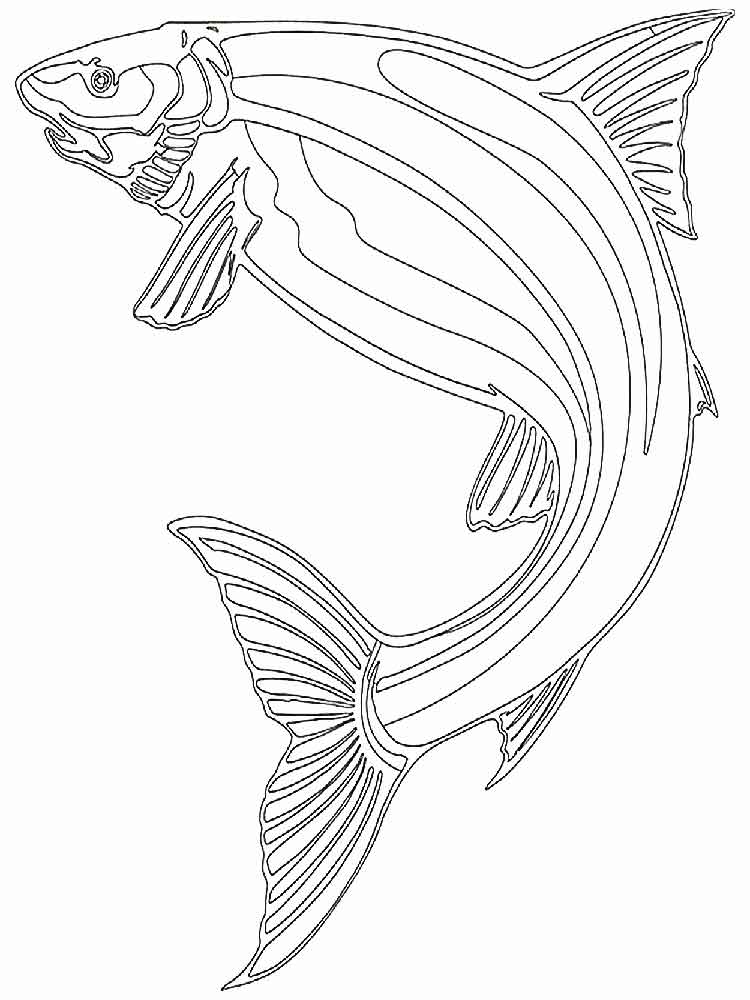 Image Result For Skipjack Coloring Page