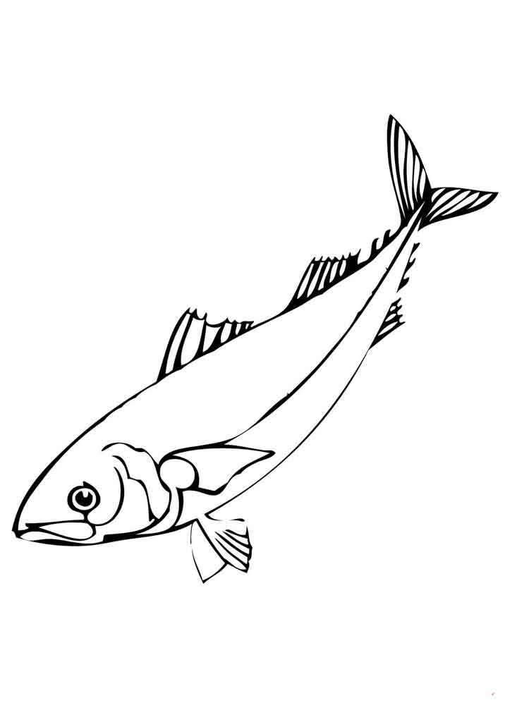 Herring Coloring Pages 5