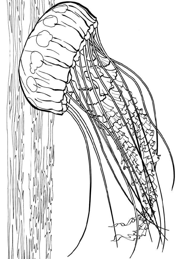 Jellyfish coloring pages. Download and print Jellyfish ...