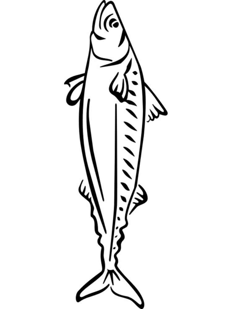 Mackerel coloring pages Download