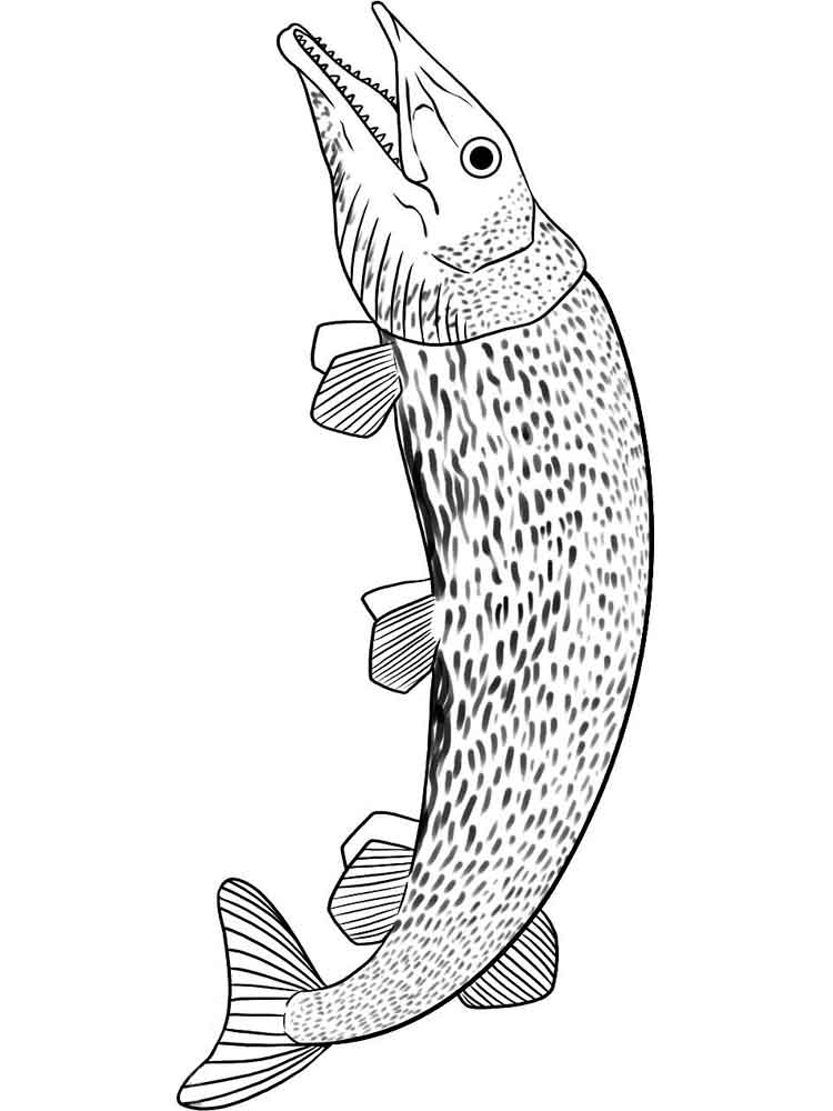 Pike coloring pages Download and
