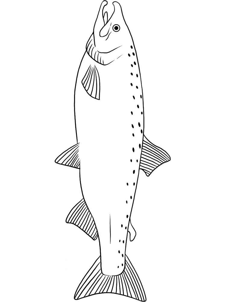 Salmon Coloring Pages 7