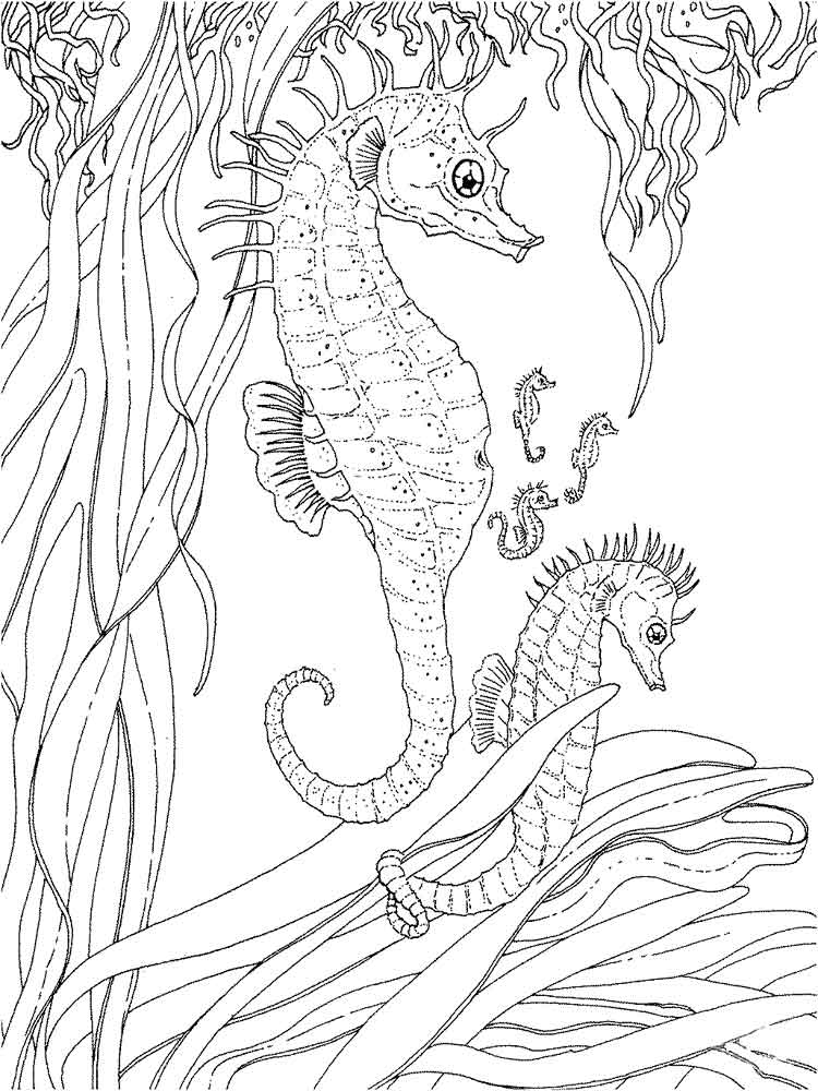 Hard Seahorse Coloring Pages