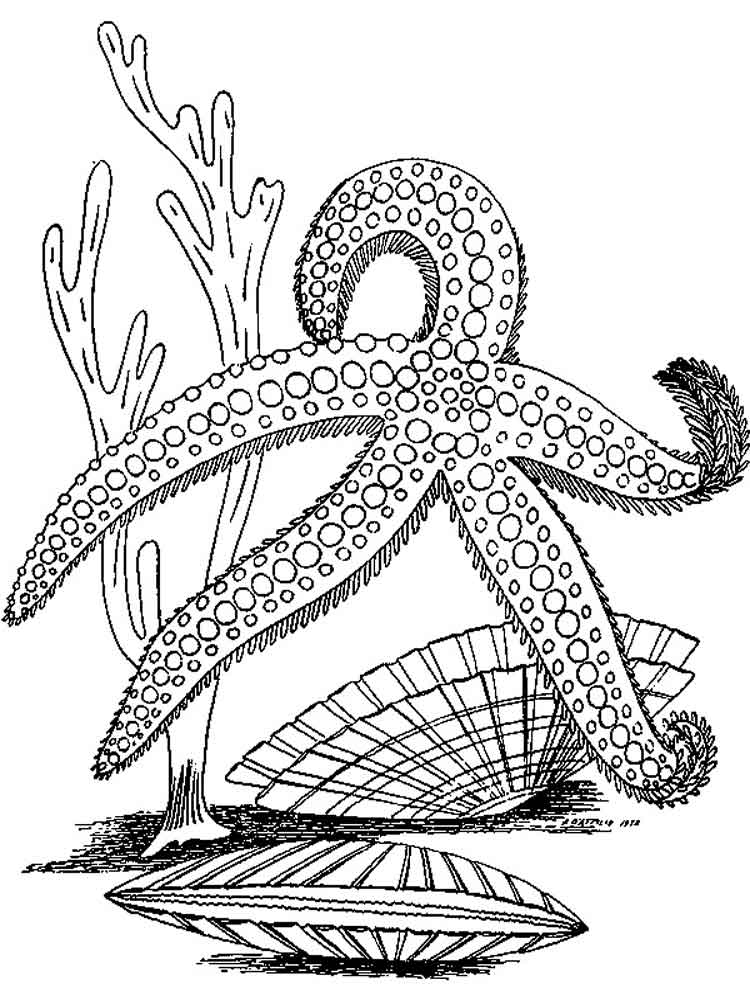 starfish coloring pages - starfish coloring pages download and print starfish