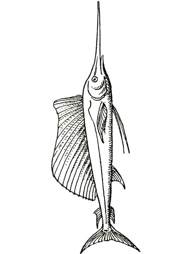 Swordfish coloring pages Download and print Swordfish