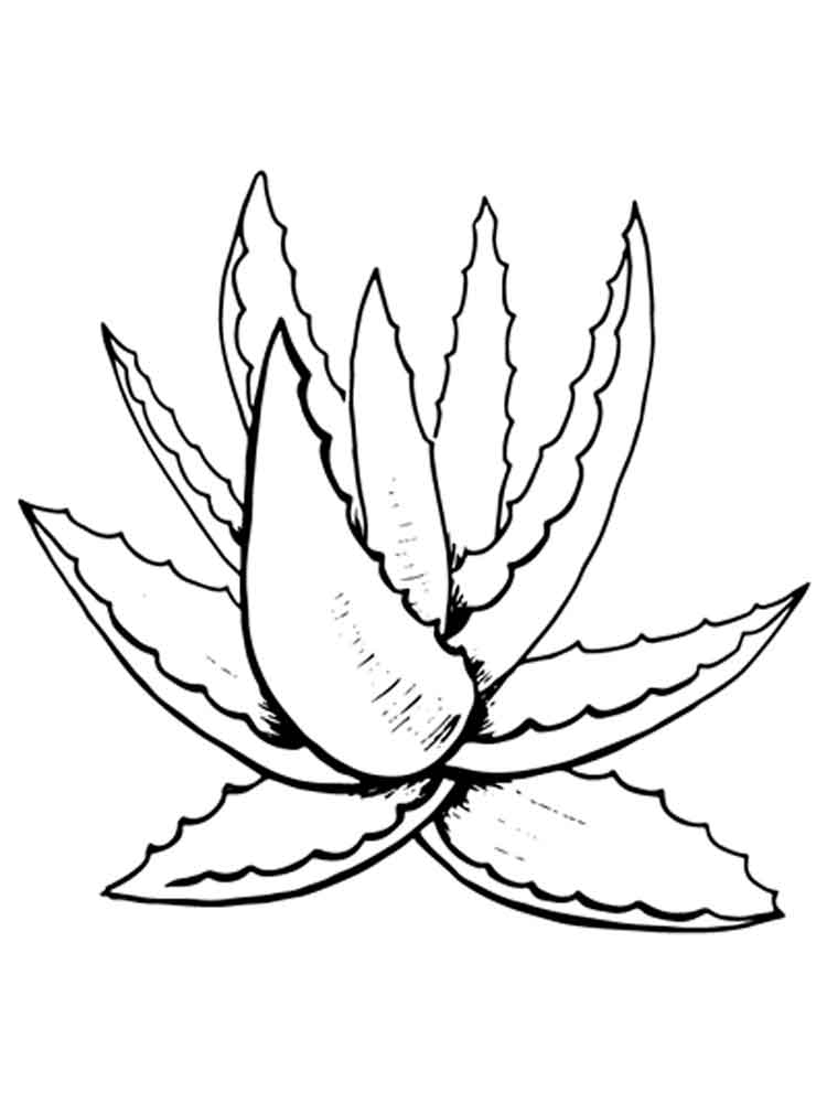 aloe coloring pages 1