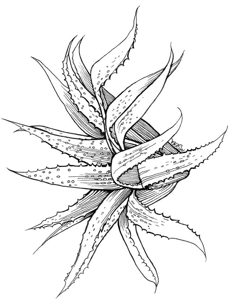 aloe coloring pages 3