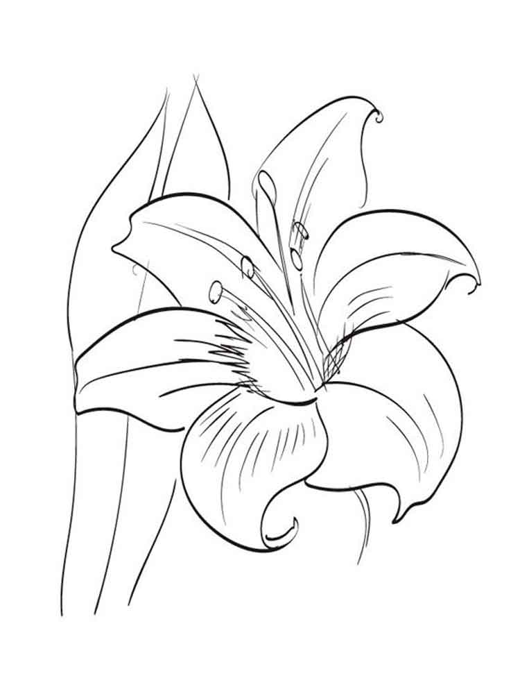Amaryllis Coloring Pages Print