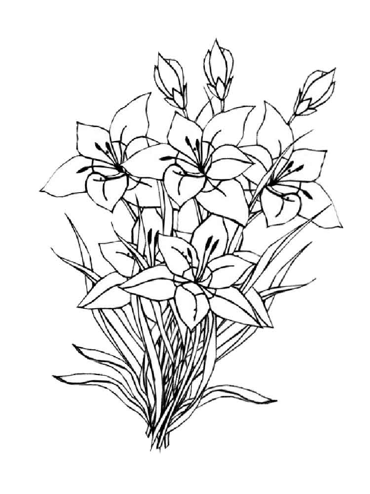 Amaryllis coloring pages Download and print Amaryllis