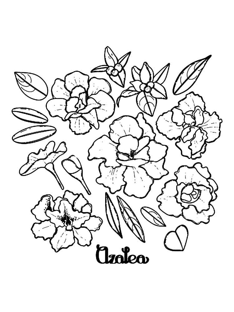Azalea coloring pages Download
