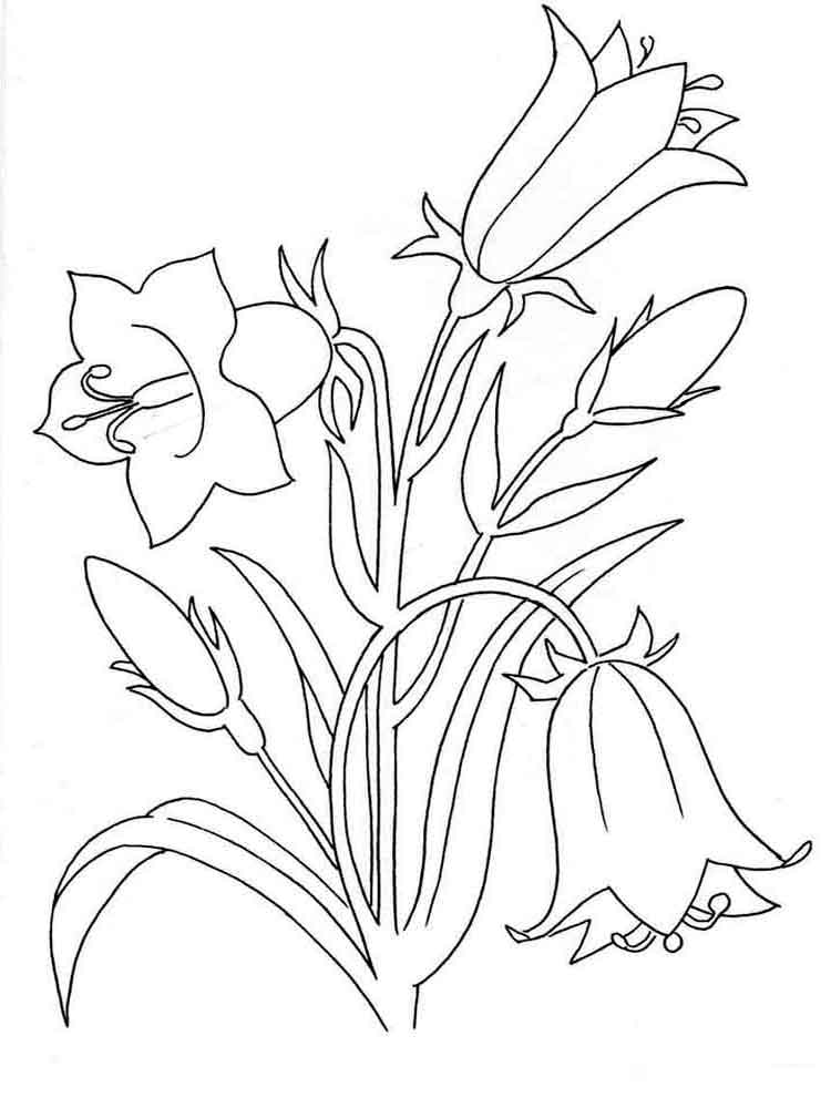 Bellflower coloring pages Download