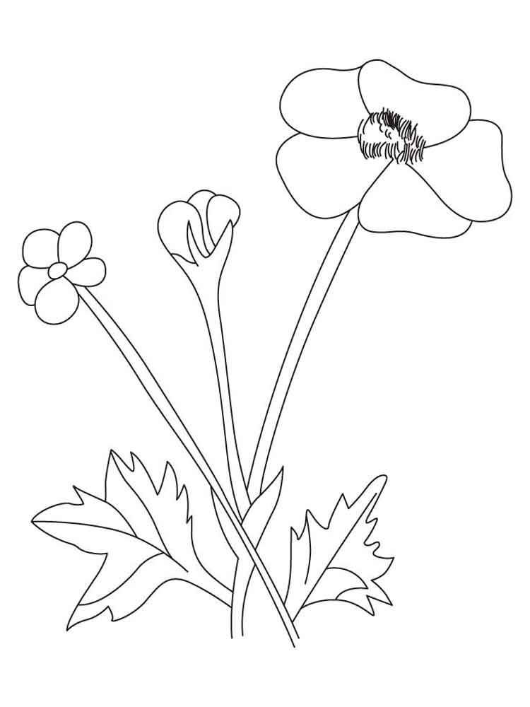 Buttercup Flower Coloring Pages Download And Print