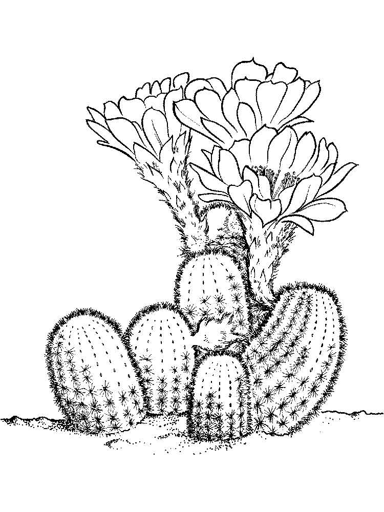 Cactus coloring pages Download and print Cactus coloring pages