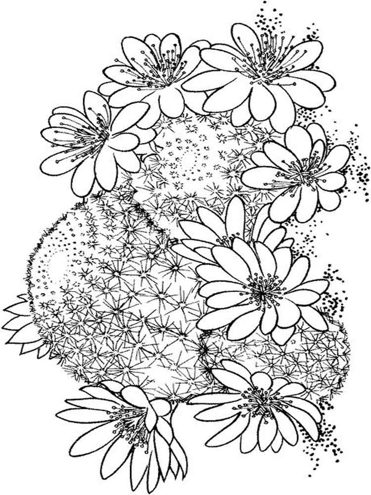cactus coloring pages plants - photo#21