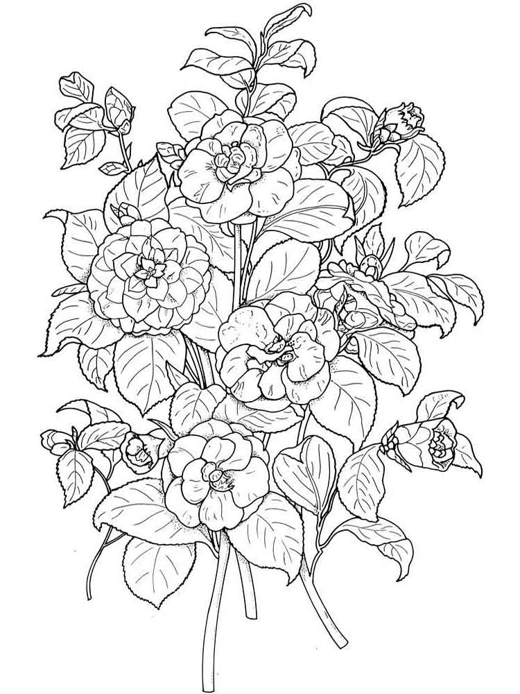 Camellia Flower Coloring Pages Download And Print