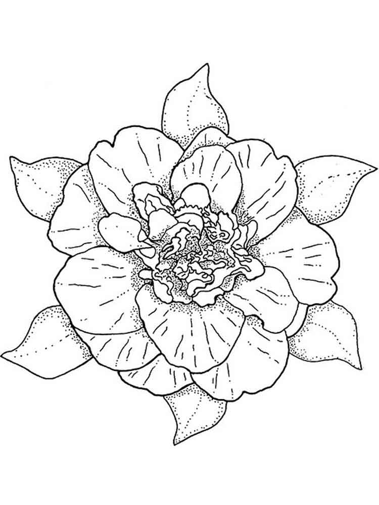 Camellia Flower Coloring Pages 2