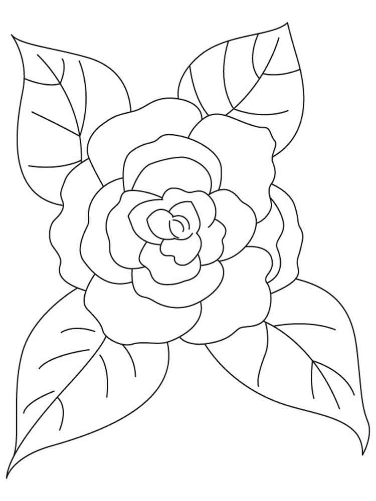 Camellia Flower Line Drawing : Camellia flower coloring pages page