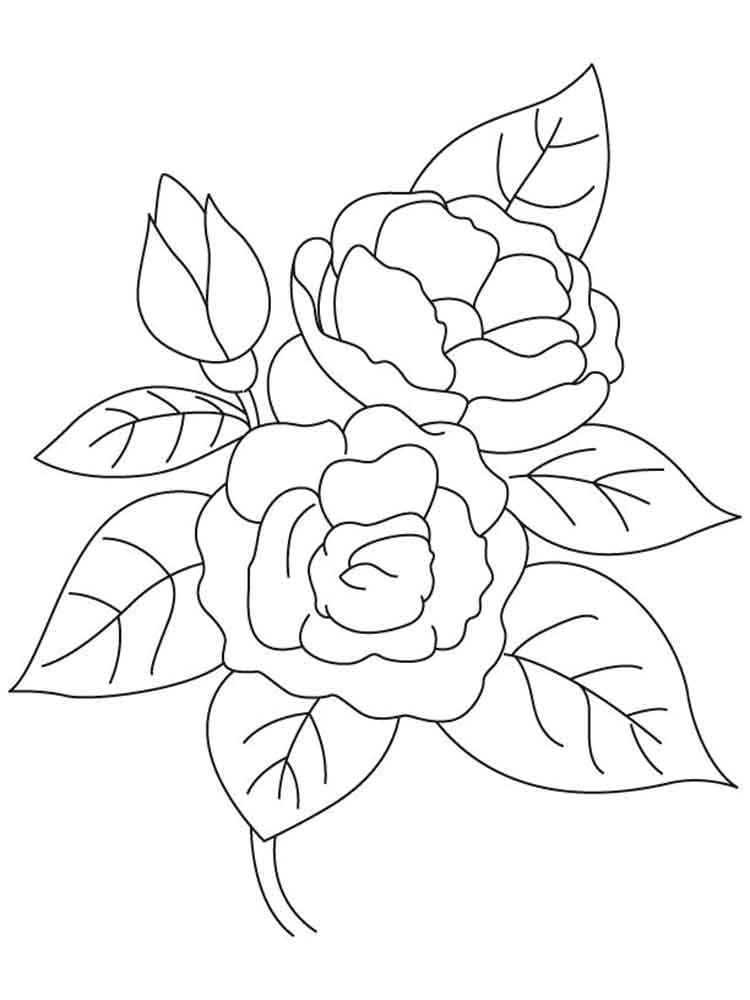 Camellia flower coloring pages