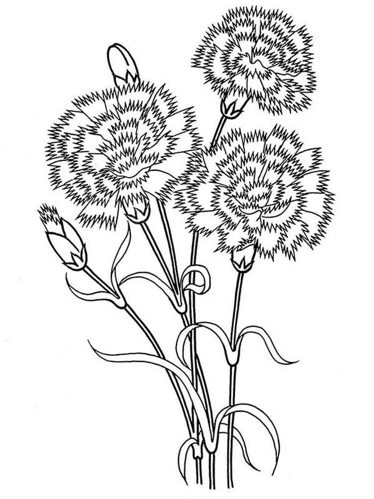 Carnation Flower Coloring Pages 5