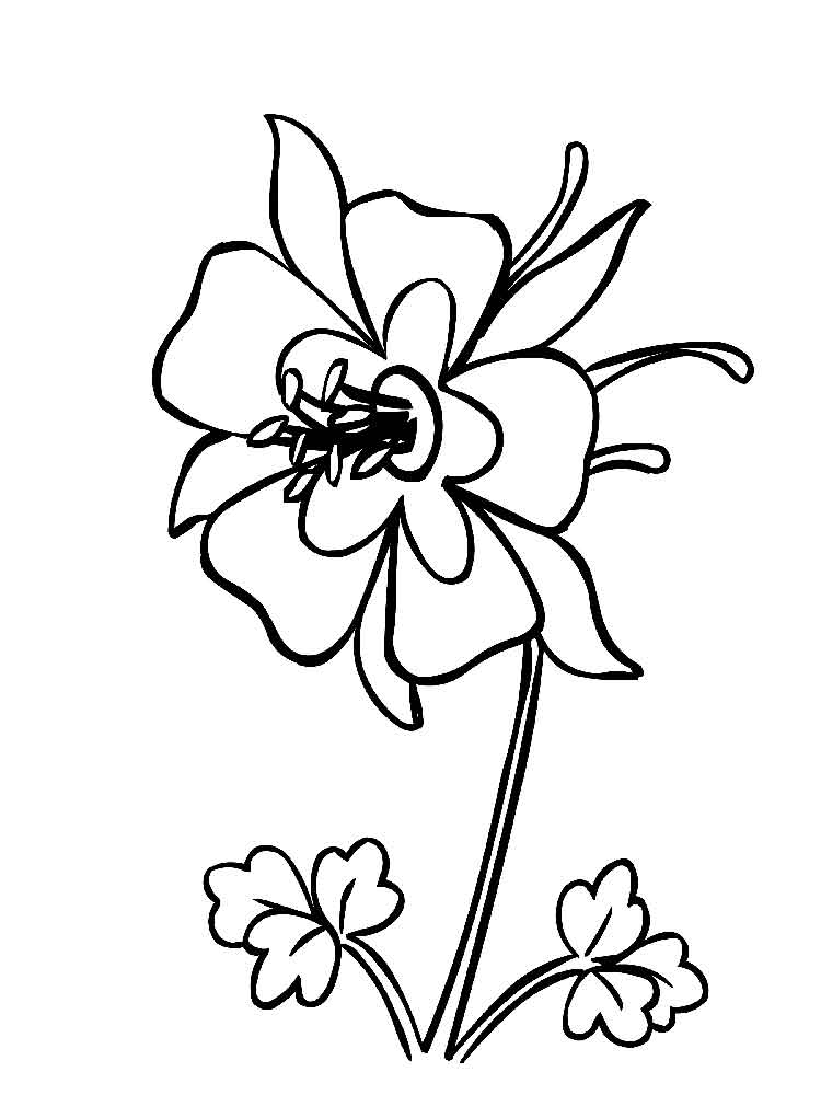 Columbine Flower Line Drawing : Columbine flowers coloring pages download and print